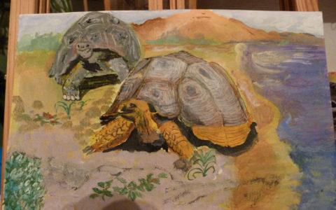 tableau-peinture-tortue